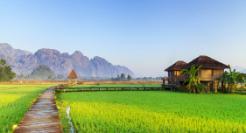 laos-ferme-biologique-paysage
