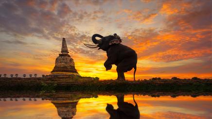 Thailande éléphant pagode